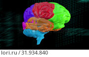 Купить «Multicolored rotating brain», видеоролик № 31934840, снято 26 марта 2019 г. (c) Wavebreak Media / Фотобанк Лори