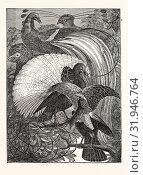 Купить «1. Paradisea apoda. The Emerald. 2. Paradisea aurea. The Siflet. 3. The Incomparable, (Le Vaillant). 4. The Cloudy, (Le Vaillant). 5. Paradisea superba. The Superb», фото № 31946764, снято 3 января 2013 г. (c) age Fotostock / Фотобанк Лори