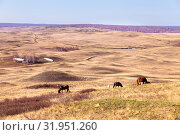 Купить «Exhausted after a bad winter feed, horses and foals graze at the foot of the hill. View of the valley.», фото № 31951260, снято 23 апреля 2019 г. (c) Акиньшин Владимир / Фотобанк Лори