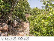 Walking Path In Green Forest in Saychelles (2018 год). Редакционное фото, фотограф Александр Бекишев / Фотобанк Лори