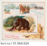 Купить «Black Bear, from Quadrupeds series (N41) for Allen & Ginter Cigarettes, 1890, Commercial color lithograph, Sheet: 2 7/8 x 3 1/4 in. (7.3 x 8.3 cm), Large...», фото № 31964924, снято 27 апреля 2017 г. (c) age Fotostock / Фотобанк Лори