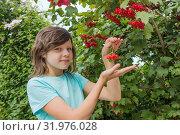 Купить «Девочка и спелые ягоды калины в саду», фото № 31976028, снято 5 августа 2019 г. (c) Александр Романов / Фотобанк Лори