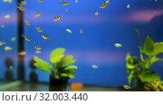 Купить «Many aquariums with exotic fish and plants for sale in pet shop», видеоролик № 32003440, снято 26 марта 2019 г. (c) Яков Филимонов / Фотобанк Лори
