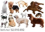 Купить «different dog breeds», фото № 32010692, снято 10 декабря 2019 г. (c) Яков Филимонов / Фотобанк Лори