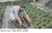 Купить «Portrait of confident male farmer engaged in cultivation of tomatoes in greenhouse», видеоролик № 32031256, снято 26 апреля 2019 г. (c) Яков Филимонов / Фотобанк Лори