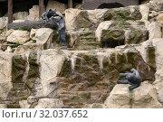 Город Рязань, каскадный фонтан с тремя скульптурами медвежат. Скульптор Олег Седов (2019 год). Редакционное фото, фотограф Dmitry29 / Фотобанк Лори
