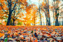 Купить «Осенний пейзаж. Осенний парк. Autumn landscape - yellowed trees and fallen autumn leaves in city park alley in cloudy weather», фото № 32038444, снято 17 октября 2018 г. (c) Зезелина Марина / Фотобанк Лори