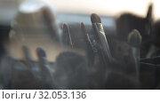 Купить «Brushes for Makeup artists Macro 100mm slider camera smooth motion», видеоролик № 32053136, снято 20 августа 2019 г. (c) Aleksejs Bergmanis / Фотобанк Лори
