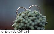 Gold Wedding on the Chamomile flowers Rings macro closeup shoot diamon Jewellery. Стоковое видео, видеограф Aleksejs Bergmanis / Фотобанк Лори