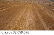 Round dried haystacks in the field. Стоковое видео, видеограф Антон Гвоздиков / Фотобанк Лори