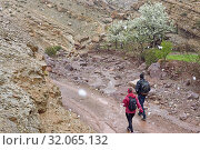 Hikers returning from the village of Tighza passing in front of flowering pear trees under the snow, Ounila River valley, Ouarzazate Province, region of Draa-Tafilalet, Morocco, North West Africa. (2019 год). Редакционное фото, фотограф Christian Goupi / age Fotostock / Фотобанк Лори
