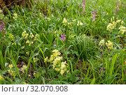 Reich blühende Blumenwiese im zeitigen Frühjahr. Стоковое фото, фотограф RoHa-Fotothek Fürmann / age Fotostock / Фотобанк Лори