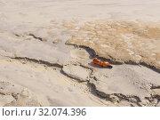 Купить «Trash empty bottle on lifeless land», фото № 32074396, снято 10 августа 2019 г. (c) Евгений Харитонов / Фотобанк Лори