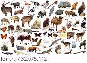 Купить «animal collection asia», фото № 32075112, снято 18 октября 2019 г. (c) Яков Филимонов / Фотобанк Лори
