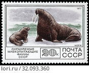 Купить «Walrus, Odobenus rosmarus, postage stamp, Russia, USSR, 1977.», фото № 32093360, снято 2 января 2011 г. (c) age Fotostock / Фотобанк Лори