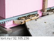 Пчелы за работой несут пыльцу и нектар в пчелиный улей. Стоковое фото, фотограф Кузин Алексей / Фотобанк Лори