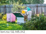 Пчеловоды за работой. Сбор меда из улья медоносных пчел на пасеке. Стоковое фото, фотограф Кузин Алексей / Фотобанк Лори