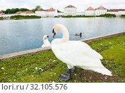 Купить «Белые лебеди рядом с дворцом Нимфенбург (Schloss Nymphenburg). Летний день. Мюнхен. Бавария. Германия», фото № 32105576, снято 23 июня 2019 г. (c) E. O. / Фотобанк Лори