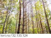 Купить «mixed summer forest», фото № 32133124, снято 19 сентября 2018 г. (c) Syda Productions / Фотобанк Лори