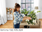 happy asian woman cleaning houseplant at home. Стоковое фото, фотограф Syda Productions / Фотобанк Лори