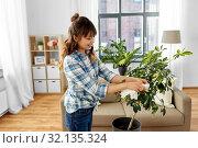 Купить «happy asian woman cleaning houseplant at home», фото № 32135324, снято 13 апреля 2019 г. (c) Syda Productions / Фотобанк Лори
