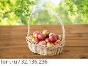 Купить «ripe apples in wicker basket on wooden table», фото № 32136236, снято 24 августа 2018 г. (c) Syda Productions / Фотобанк Лори