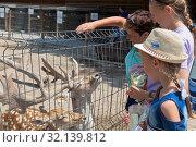 Купить «Посетители зоопарка кормят оленей в Бахчисарайском парке миниатюр, Крым», фото № 32139812, снято 22 июля 2019 г. (c) Николай Мухорин / Фотобанк Лори