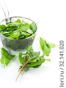 Купить «bunch of organic fresh green sorrel, on white background.», фото № 32141020, снято 5 сентября 2019 г. (c) Peredniankina / Фотобанк Лори