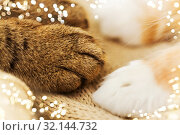 Купить «close up of paws of two cats on blanket», фото № 32144732, снято 15 ноября 2017 г. (c) Syda Productions / Фотобанк Лори