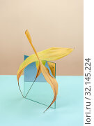 Купить «Abstract still life with a mirror and a sheet of a dry plant on a bicolor background.», фото № 32145224, снято 11 июля 2019 г. (c) Olesya Tseytlin / Фотобанк Лори