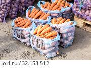 Купить «Fresh organic carrots of new harvest», фото № 32153512, снято 5 октября 2018 г. (c) FotograFF / Фотобанк Лори