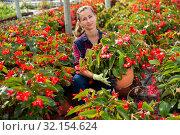 Female florist arranging potted begonias. Стоковое фото, фотограф Яков Филимонов / Фотобанк Лори