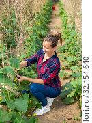 Купить «Woman farmer fastening cucumber on supporting netting», фото № 32154640, снято 16 сентября 2019 г. (c) Яков Филимонов / Фотобанк Лори