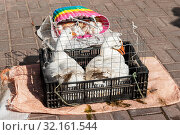 Купить «Белые гуси в клетке на рынке», эксклюзивное фото № 32161544, снято 4 сентября 2019 г. (c) Александр Щепин / Фотобанк Лори