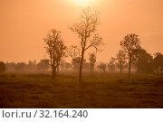 Купить «A field and Landscape near the city of Buriram in the province of Buri Ram in Isan in Northeast thailand. Thailand, Buriram, November, 2017», фото № 32164240, снято 26 мая 2020 г. (c) age Fotostock / Фотобанк Лори