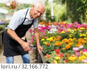 Elderly man working in greenhouse. Стоковое фото, фотограф Яков Филимонов / Фотобанк Лори