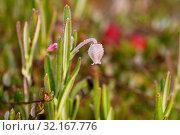 Купить «Цветок андромеды в каплях росы», эксклюзивное фото № 32167776, снято 1 сентября 2019 г. (c) Dmitry29 / Фотобанк Лори