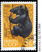 Купить «Asiatic Black Bear, Ursus thibetanus, Fauna of Sikhote-Alin Nature Reserve, postage stamp, Russia, USSR, 1970.», фото № 32167984, снято 5 января 2011 г. (c) age Fotostock / Фотобанк Лори