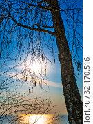 Берёза с весенними серёжками на фоне заходящего солнца. Новосибирская область, Западная Сибирь, Россия. Стоковое фото, фотограф Евгений Мухортов / Фотобанк Лори