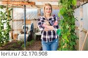 Купить «Woman farmer working in the greenhouse», фото № 32170908, снято 28 февраля 2019 г. (c) Яков Филимонов / Фотобанк Лори