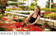 Купить «Positive female florist in apron working with begonia plants in hothouse indoors», видеоролик № 32176380, снято 26 мая 2019 г. (c) Яков Филимонов / Фотобанк Лори