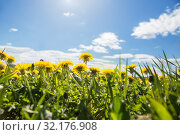 Купить «Spring natural background. Yellow dandelions in meadow under blue sky», фото № 32176908, снято 17 мая 2019 г. (c) Юлия Бабкина / Фотобанк Лори