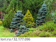 Купить «Various conifers as an element of landscape design», фото № 32177096, снято 9 сентября 2019 г. (c) Евгений Харитонов / Фотобанк Лори