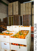 Купить «Stacks of fruit boxes with fresh ripe mandarin oranges in storage warehouse», фото № 32178268, снято 21 сентября 2019 г. (c) Яков Филимонов / Фотобанк Лори