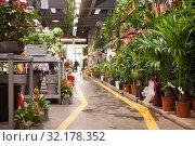 Купить «Pots of flowers are on shelf in a large flower shop», фото № 32178352, снято 20 мая 2019 г. (c) Яков Филимонов / Фотобанк Лори