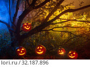 Halloween pumpkins in night forest. Стоковое фото, фотограф Майя Крученкова / Фотобанк Лори