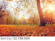 Купить «Осенний пейзаж. Осенние деревья в парке на закате. Fall sunny landscape. Fall park trees and falling autumn leaves on the ground in the park», фото № 32198064, снято 18 октября 2018 г. (c) Зезелина Марина / Фотобанк Лори