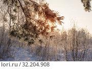 Купить «winter forest with frost», фото № 32204908, снято 23 января 2018 г. (c) Майя Крученкова / Фотобанк Лори