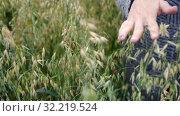Купить «female hand gently touches the strong ears of oats, cloudy day, slow motion», видеоролик № 32219524, снято 13 августа 2019 г. (c) Ирина Мойсеева / Фотобанк Лори