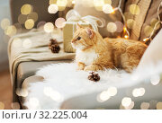 red tabby cat on sofa with christmas gift at home. Стоковое фото, фотограф Syda Productions / Фотобанк Лори